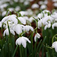 Snowdrops at Hodsock Priory & Lincoln
